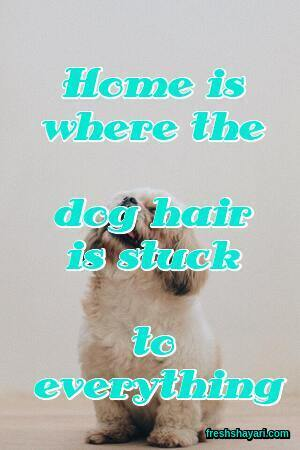 Dog Captions For Instagram