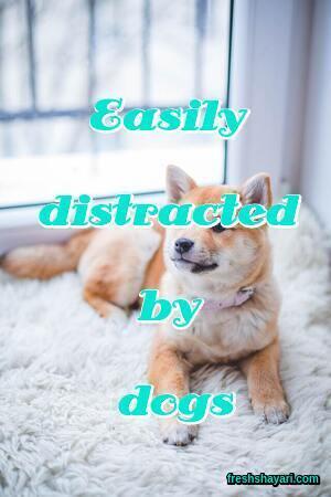 Dog Instagram Captions
