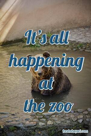 Zoo Instagram Captions